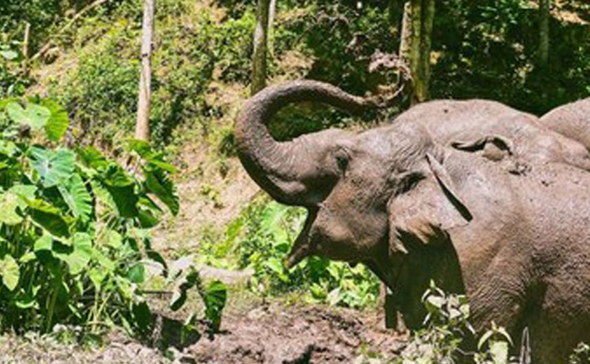 Children day with elephant at Pakbeng
