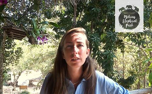 Wendy Leggat Manager of the mekong elephant park