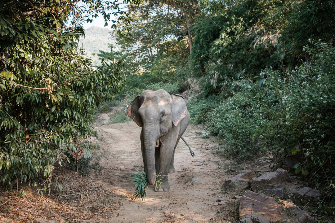 Activities in MEP - Hiking with elephant