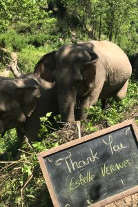 Mekong Elephant Park - Thank you gallery