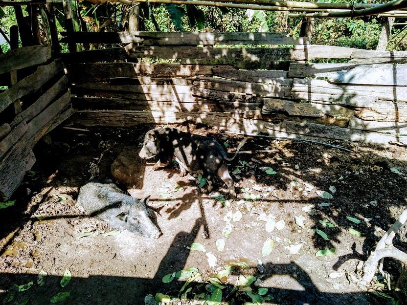 Family farm in mekong elephant park - pakbeng laos