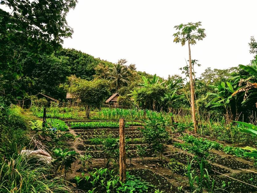 Family farm in mekong elephant park